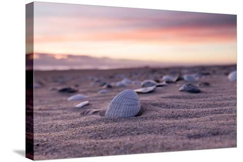Shells Adorn the Sandly Shoreline of Pea Island National Wildlife Refuge-Robbie George-Stretched Canvas Print