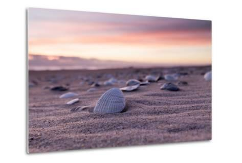 Shells Adorn the Sandly Shoreline of Pea Island National Wildlife Refuge-Robbie George-Metal Print