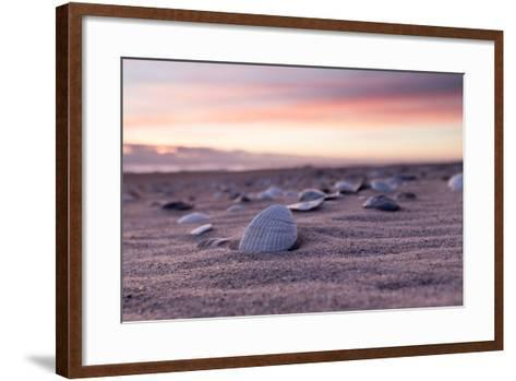 Shells Adorn the Sandly Shoreline of Pea Island National Wildlife Refuge-Robbie George-Framed Art Print