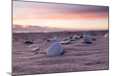 Shells Adorn the Sandly Shoreline of Pea Island National Wildlife Refuge-Robbie George-Mounted Photographic Print