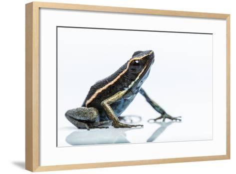 A New Species of Poison Dart Frog Belongs to the Genus Ameerega-Charlie James-Framed Art Print