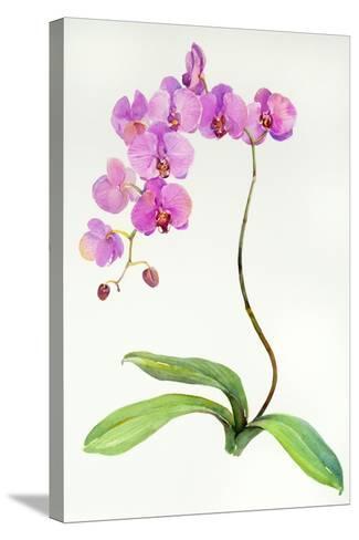 Orchid Botanical, 2013-John Keeling-Stretched Canvas Print