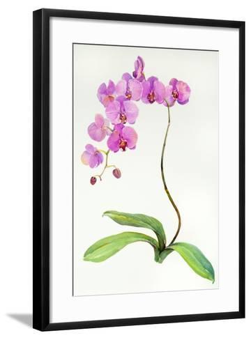 Orchid Botanical, 2013-John Keeling-Framed Art Print