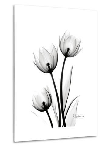 Tulips High Contrast-Albert Koetsier-Metal Print