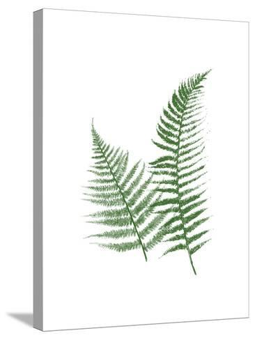 Green Ferns-Jace Grey-Stretched Canvas Print
