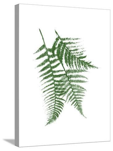 Green Ferns Mate-Jace Grey-Stretched Canvas Print