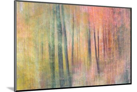Woodland Dreams IV-Doug Chinnery-Mounted Giclee Print