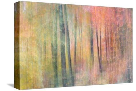 Woodland Dreams IV-Doug Chinnery-Stretched Canvas Print