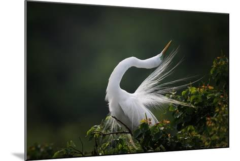 The Moment You Will Never Forget!-David H Yang-Mounted Photographic Print