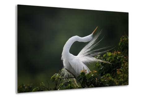 The Moment You Will Never Forget!-David H Yang-Metal Print