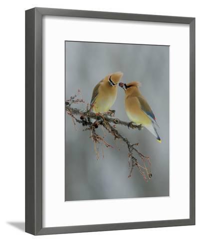The Offering-Rick Tomalty-Framed Art Print