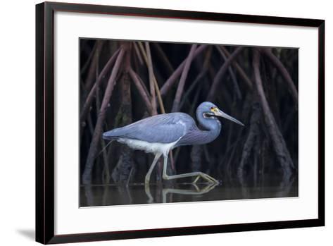 Stalking in the Mangroves-Greg Barsh-Framed Art Print