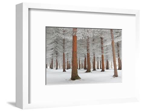 In White-Dragisa Petrovic-Framed Art Print