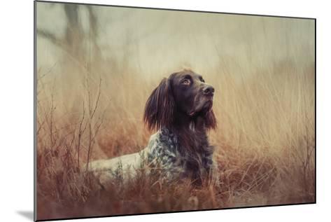 Beautiful Aragorn-Heike Willers-Mounted Photographic Print
