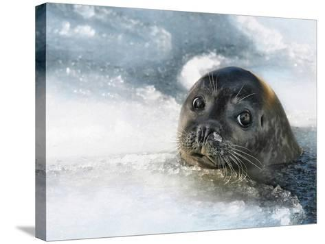 Do You Have a Fish?-Holger Droste-Stretched Canvas Print