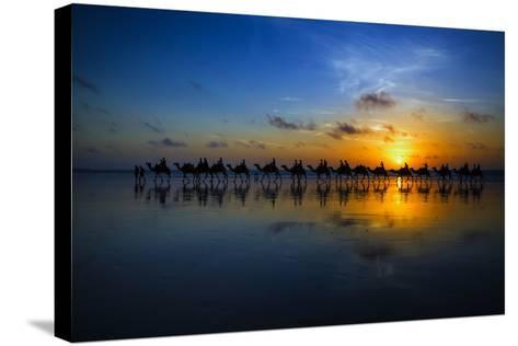 Sunset Camel Ride-Louise Wolbers-Stretched Canvas Print
