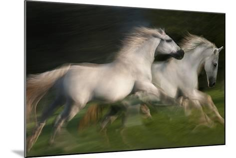 Gallop for Two-Milan Malovrh-Mounted Photographic Print