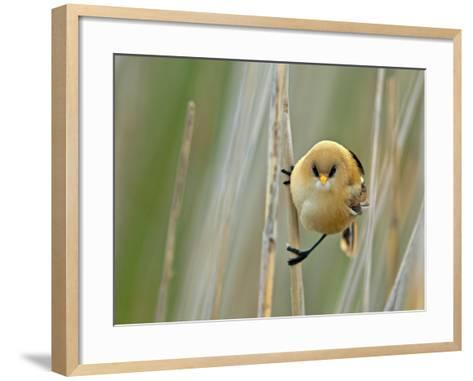 Angrybird II-Henrik Pettersson-Framed Art Print