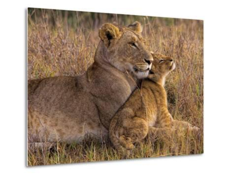 Baby Lion with Mother-Henry Jager-Metal Print