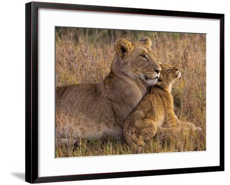 Baby Lion with Mother-Henry Jager-Framed Art Print
