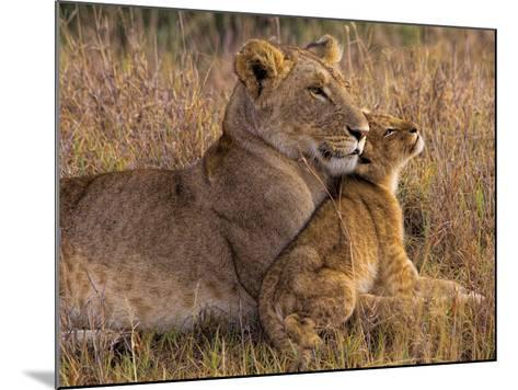Baby Lion with Mother-Henry Jager-Mounted Photographic Print