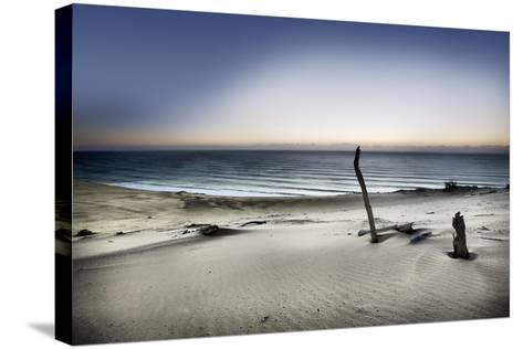 Reach for the Sun-Mel Brackstone-Stretched Canvas Print