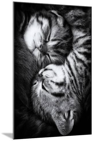 Yin and Yang-Andrea Jancova-Mounted Photographic Print