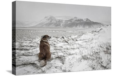 Snowstorm-Bragi Ingibergsson --Stretched Canvas Print