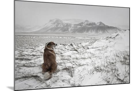 Snowstorm-Bragi Ingibergsson --Mounted Photographic Print