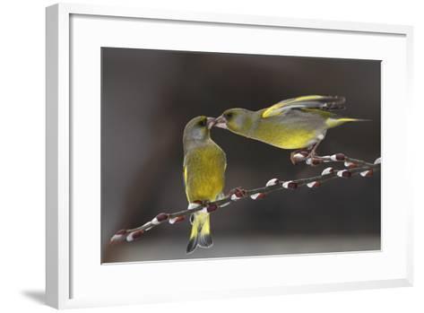 Love on Brach-Tomas Sereda-Framed Art Print