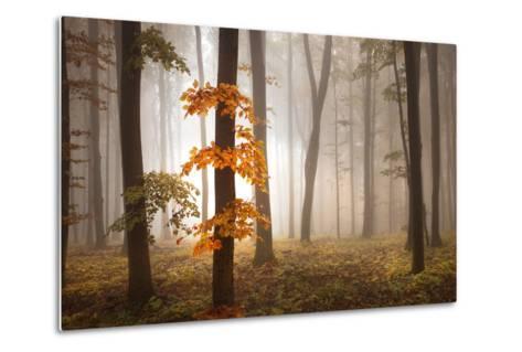 In November Light-Franz Schumacher-Metal Print