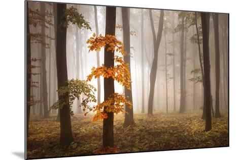 In November Light-Franz Schumacher-Mounted Photographic Print