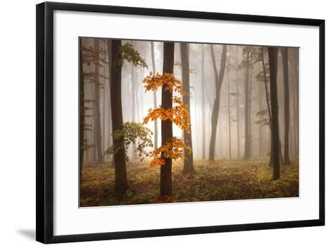 In November Light-Franz Schumacher-Framed Art Print