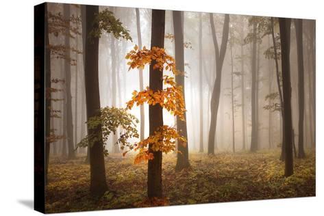 In November Light-Franz Schumacher-Stretched Canvas Print