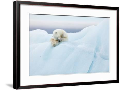 Polar Bear Grooming-Joan Gil Raga-Framed Art Print