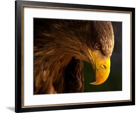 Eagle Pursues Prey-Adriana K.H.-Framed Art Print