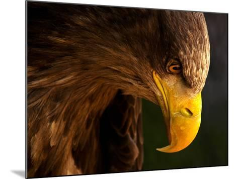 Eagle Pursues Prey-Adriana K.H.-Mounted Photographic Print