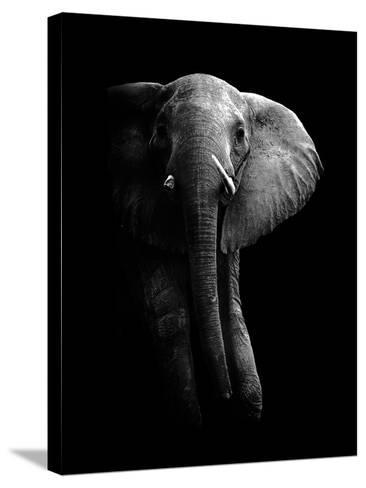 Elephant!-WildPhotoArt-Stretched Canvas Print