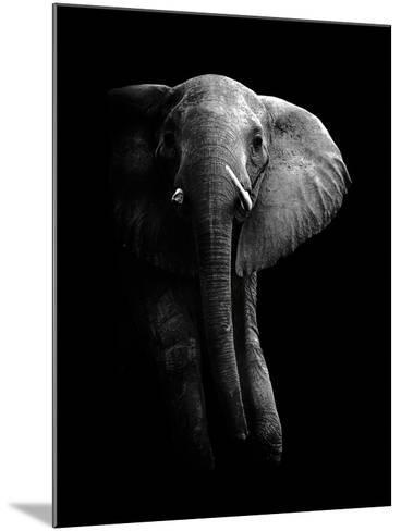 Elephant!-WildPhotoArt-Mounted Photographic Print