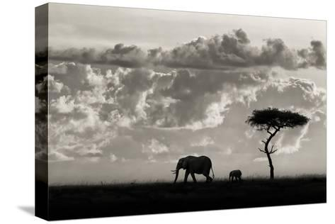 Silhouettes of Mara-Mario Moreno-Stretched Canvas Print