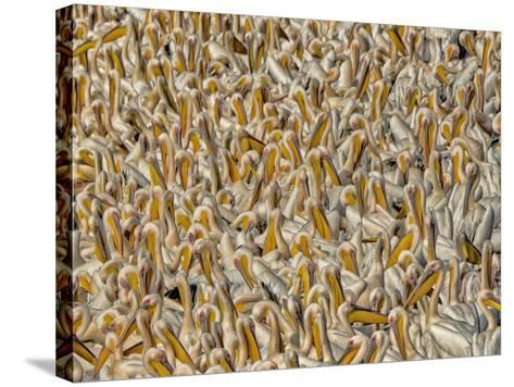 Crowded-Keren Or-Stretched Canvas Print