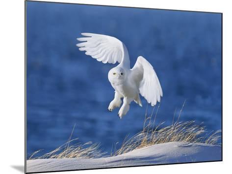 White Spirit Demon-Wei Tang-Mounted Photographic Print