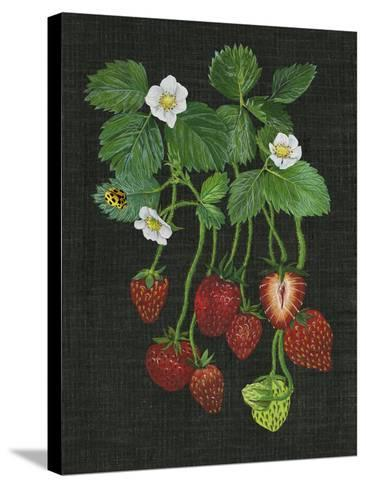 Strawberry Fields II-Melissa Wang-Stretched Canvas Print
