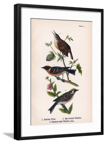 Vintage Birds: Wrens and Warblers, Plate 73-Piddix-Framed Art Print