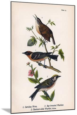 Vintage Birds: Wrens and Warblers, Plate 73-Piddix-Mounted Art Print