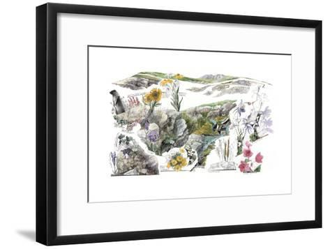 A Drawing of the Wildflowers in America's Alpine Tundras-Jack Unruh-Framed Art Print