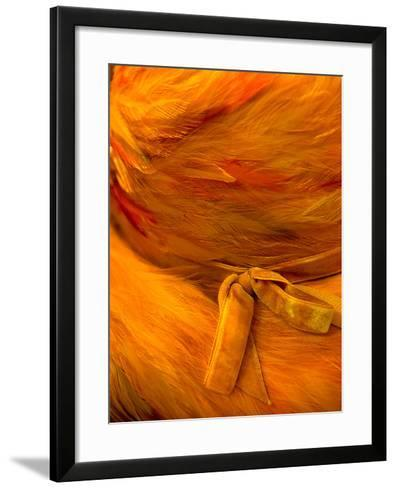 Feathers & Bows-Steven Maxx-Framed Art Print