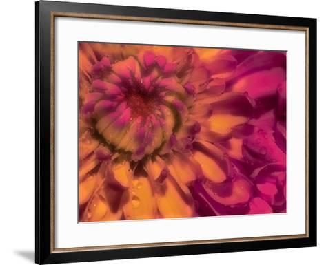 Flower Glow-Steven Maxx-Framed Art Print