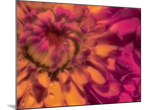 Flower Glow-Steven Maxx-Mounted Photographic Print