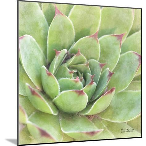 Garden Succulents IV Color-Laura Marshall-Mounted Art Print